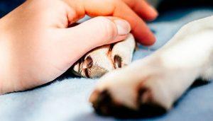 Perros portarían nuevo virus mortal para los humanos
