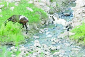 Crece contaminación del arroyo El Coyote