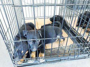 Campaña de adopción a favor de los perros