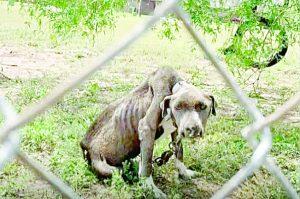 Combatirán fuerte la crueldad animal