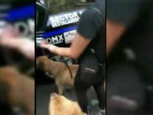 'Detienen' a perritos por jugar en una fuente