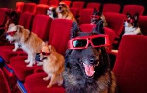 Cine en Texas admite la entrada a perros a sus salas
