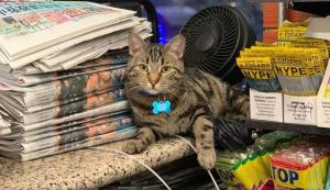 Gatos son contratados para cuidar tiendas