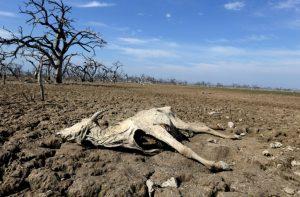 Amaga sequía a Tamaulipas