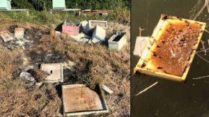 'Asesinan' a  600 mil abejas en Texas