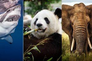 Un millón de especies podrían extinguirse por culpa de los humanos, advierte reporte