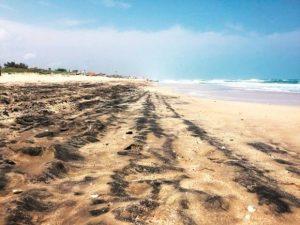 Denuncian a Pemex por contaminar Playa Miramar
