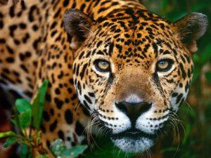 México ocupa primer lugar mundial... con más especies en peligro de extinción