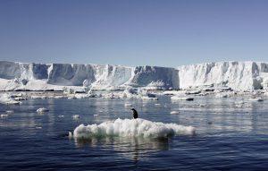 Un millón de especies, amenazadas de extinción