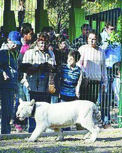 Da tigre zarpazo a niña en zoológico