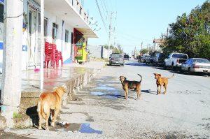 Con dueño, 4 de 10  perros 'callejeros'