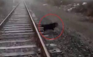 VIDEO: Maquinista salva a perro de ser arrollado en vías de tren