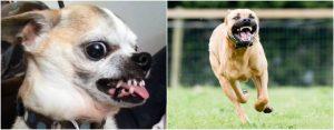 Expertos identifican a la raza de perros que más muerde a los niños