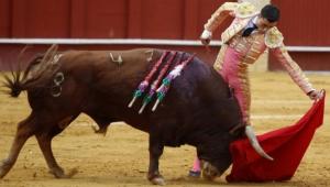 Preparan iniciativa para prohibir las corridas de toros en todo México