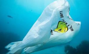 Desarrollan bolsa que en el agua se convierte en comida para peces