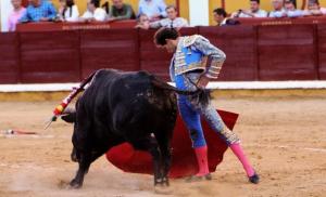 Aprueban ley que prohíbe corridas de toros y peleas de gallos en Quintana Roo