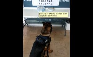 Jubilan a 28 oficiales caninos; serán adoptados por familias