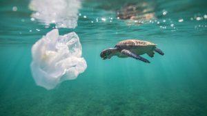 Crean bolsa que en el agua se convierte en comida para peces