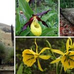 No sólo los animales: las plantas están en peligro de extinción