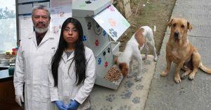 Estudiante mexicana desarrolla croquetas anticonceptivas para perros callejeros