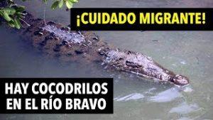 Cocodrilo en el Río Bravo migrantes no debería cruzar ¡CUIDADO!