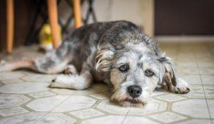 Los perros reflejan el estrés de sus dueños: Estudio