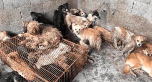 Salvan a 62 perros de morir en matadero en China