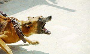 Aumentan ataques de perros; van 130