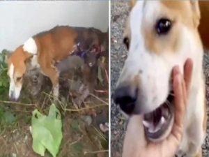 Queman a perro con asfalto hirviendo; se escondió para morir solo