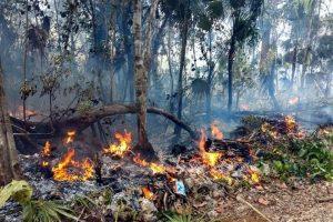 Daña incendio 2 mil hectáreas de reserva en Quintana Roo