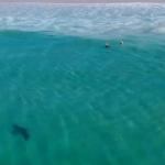 VIDEO: captan tiburón nadando a escasos metros de un grupo de menores