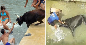 Tiran a los toros al mar para que se ahoguen en un pueblo de España