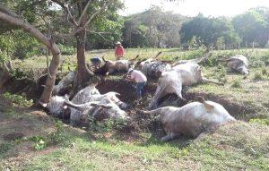Rayo mata a 13 vacas en Nuevo León
