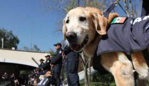 Dan en adopción a 28 oficiales caninos de la Policía Federal