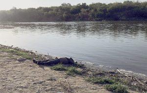 Está el río más Bravo y ya cobra 19 víctimas