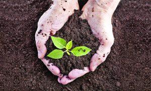 Presentan plan de Angadi para cuidar ambiente