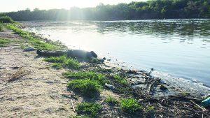 Recuperan cuerpo 19 del río Bravo