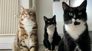 Hoy toca consentir a los gatos: ¡Día internacional del gato!