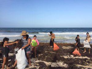¡No más tortugas muertas! Vecinos limpian sargazo en Tulum