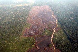 Alerta ONU por daños al Amazonas