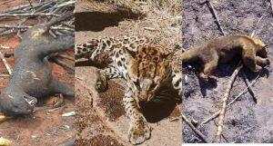 Incendio en el Amazonas mata miles de animales