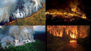 Incendios en el Amazonas: el pulmón verde del planeta se está quemando