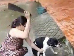 ¡Indignante! Corta la pata a su mascota de un machetazo