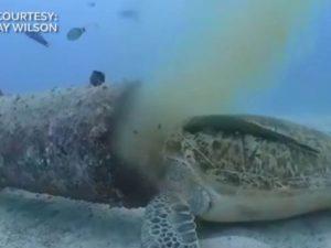 ¡Lamentable! Captan a tortuga comiendo basura en el océano