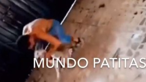 Sujeto mata a golpes a perro dentro de domicilio en CDMX