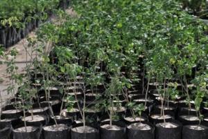 Crean la campaña de donación de árboles