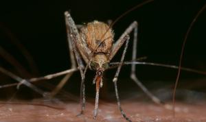 Por éstas razones te pican los mosquitos, según la ciencia