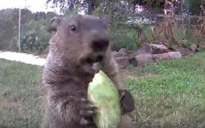 VIDEO: Descubre al 'adorable ladrón' de su jardín