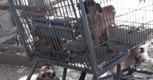 Perritos eran maltratados en casa de Ciudad Victoria; hoy la vida les cambió