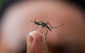 ¿Qué hacer y cómo identificar los síntomas del dengue?